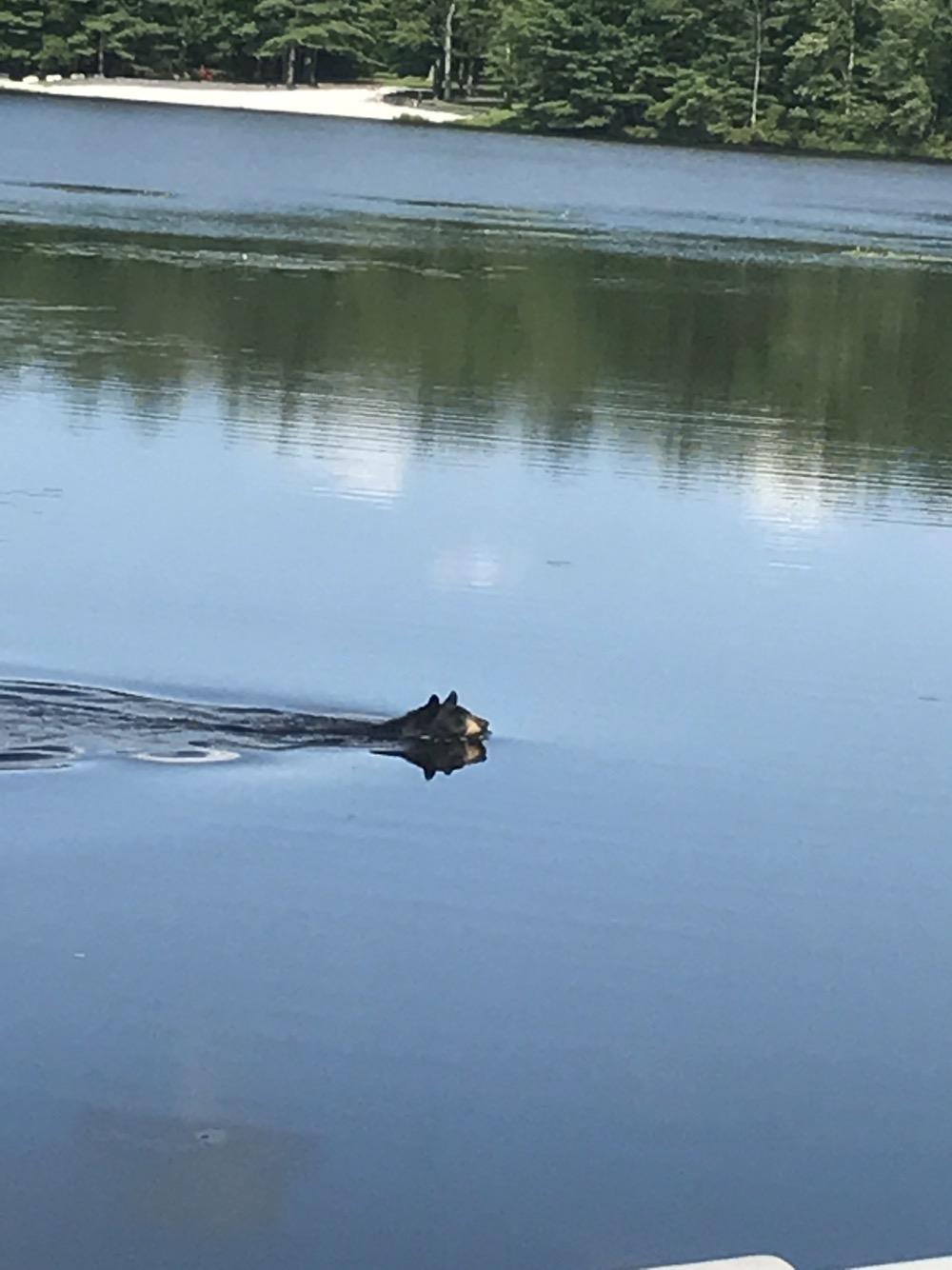 Dingmans Ferry Bears