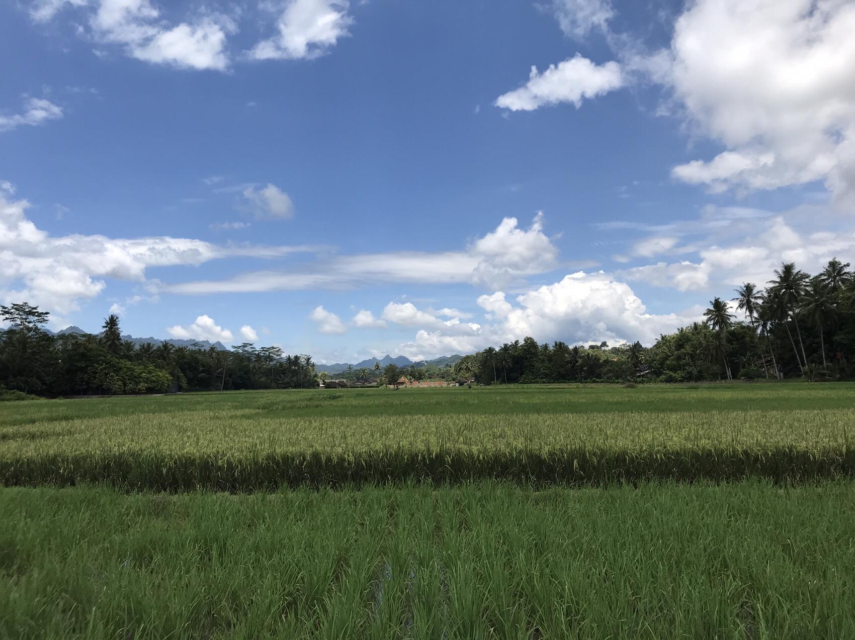 View at Rumah Dharma Borobudur
