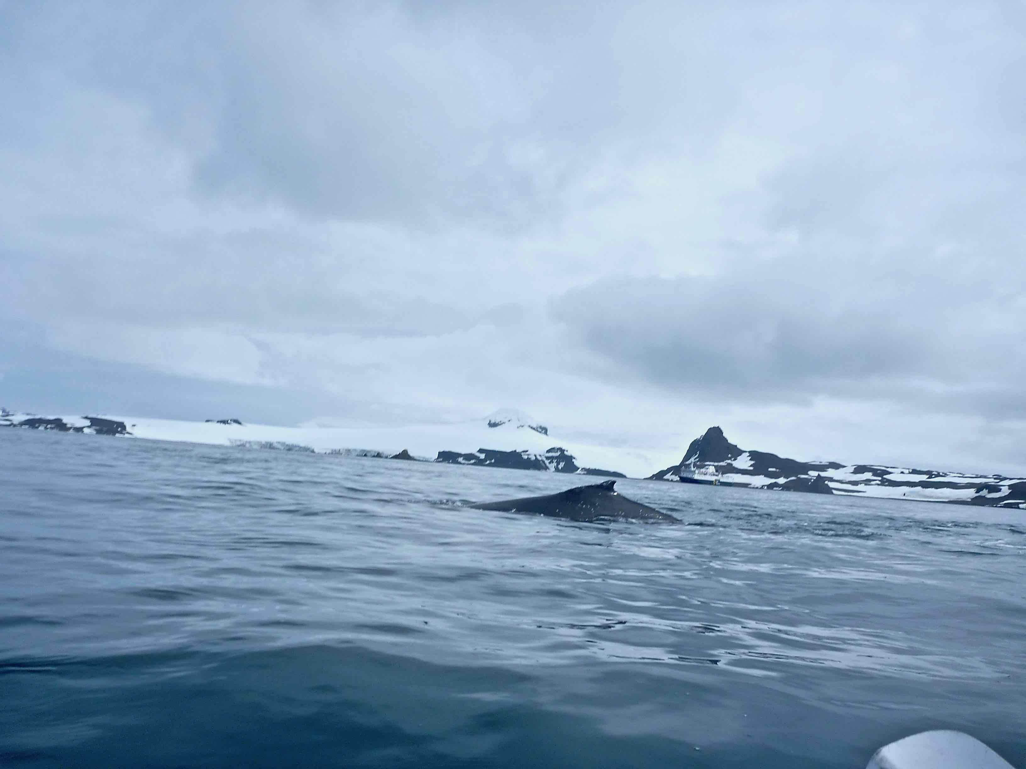 Kayaking in Antarctica--Whale from Kayak